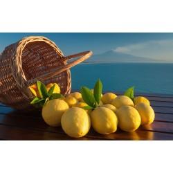 Natural line for AFP / ULTRAGEL19 lemon flavor ice cream